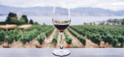 Wein – Lebensfreude, Genuss und Lifestyle
